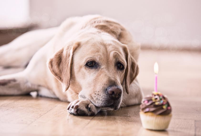 Alle Jahre wieder: Hundejahre wollen berechnet sein