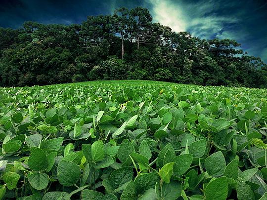 sojaanbau-regenwald