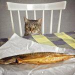Katze Fisch Ernährung