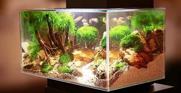 Aquarium-Rechner: Wassermenge, Liter, Volumen berechnen