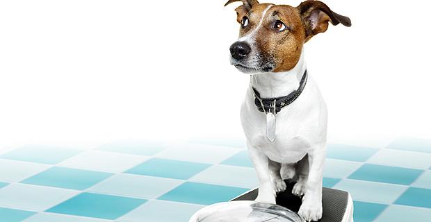 hundefutter optimalen bedarf und kosten berechnen. Black Bedroom Furniture Sets. Home Design Ideas