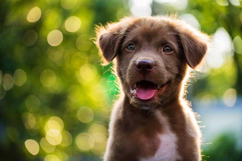 Hundejahre in menschen jahren